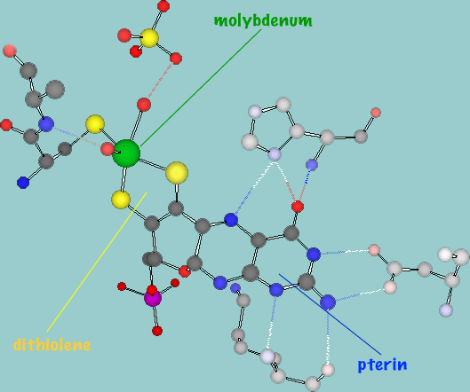Molybdenum Enzymes, Cofactors, and Model Systems
